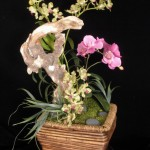 Beachwood Orchids - Item # md105