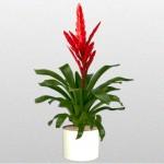 Bromeliad – Poelmania