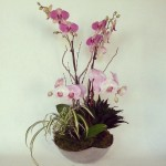 Contemporary Pink Orchid Centerpiece