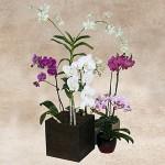 Fresh Orchid Arrangement 2
