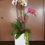 Fresh Orchid Burst