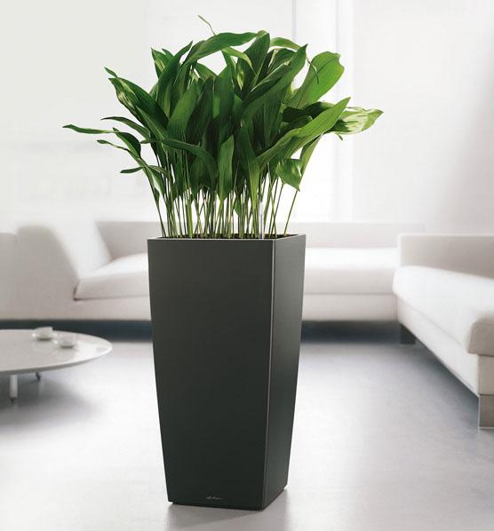 Plantas poco exigentes para aquellos que no tienen tiempo - Pedestales para macetas ...