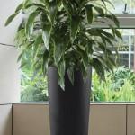 Phoenix Tall Vase