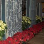 Poinsettia Display 2