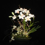 Spring Orchids - Item# md102