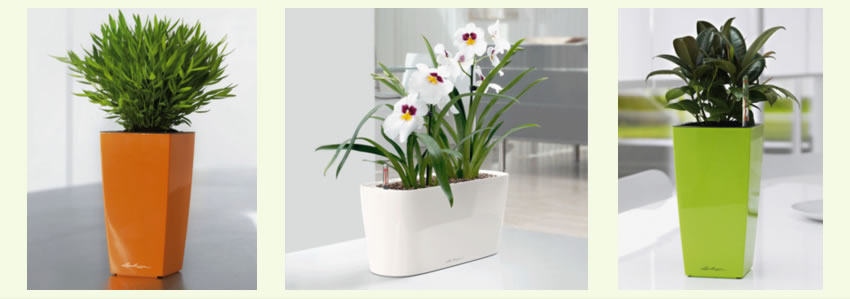 The Plant Affair proudly serves hundreds of clients throughout Los Angeles County