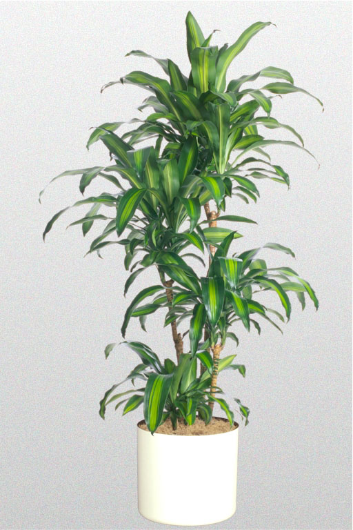 Amazoncom  Ikea Artificial Potted Plant Jade 95 Inch