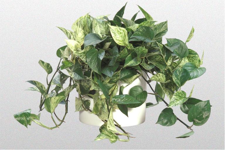 indoor plant grower machine