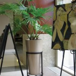 European Fantail Palm http://plantaffair.com/services/interior-landscaping-design/interior-landscape-gallery/
