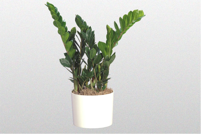 A plant affair llc los angeles leading interior plant for Low maintenance indoor plants low light
