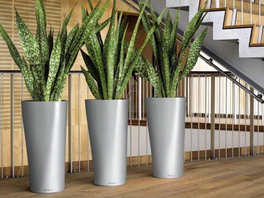 Plantscape_11