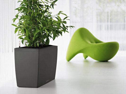 Plantscape_3